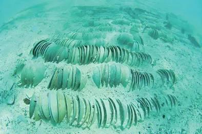 海南省四个地级市之一, 现辖西沙群岛,中沙群岛,南沙群岛的岛礁及其