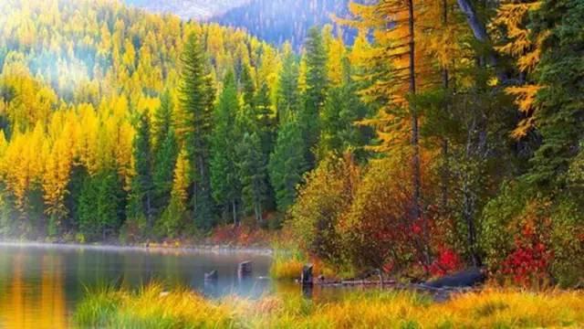 最美的秋天,就是和你一起看漫山红叶