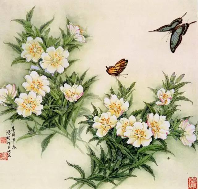 鸟画教程 工笔蝴蝶的画法步骤 工笔画蝴蝶白描图片上色步骤