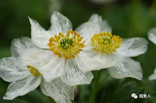 七瓣花朵矢量图