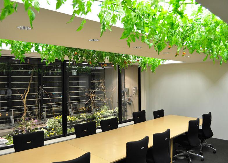 老总办公室绿植_办公室绿植