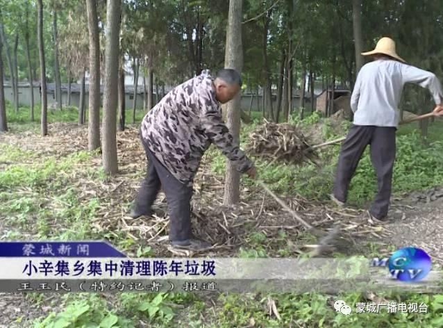 """图为小辛集乡组织开展农村陈年垃圾集中清理行动  """"三大革命""""开始后"""