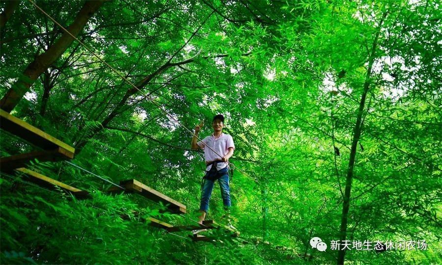 穿越丛林,各显神通!图片