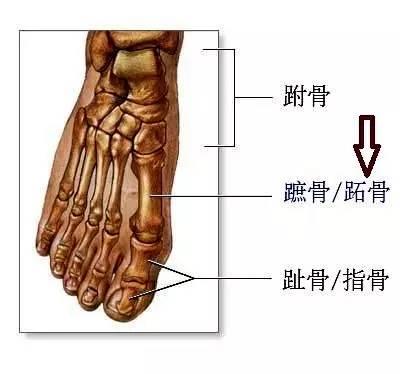 给脚部做个按摩,肝胆病痛不上身(手法图解)