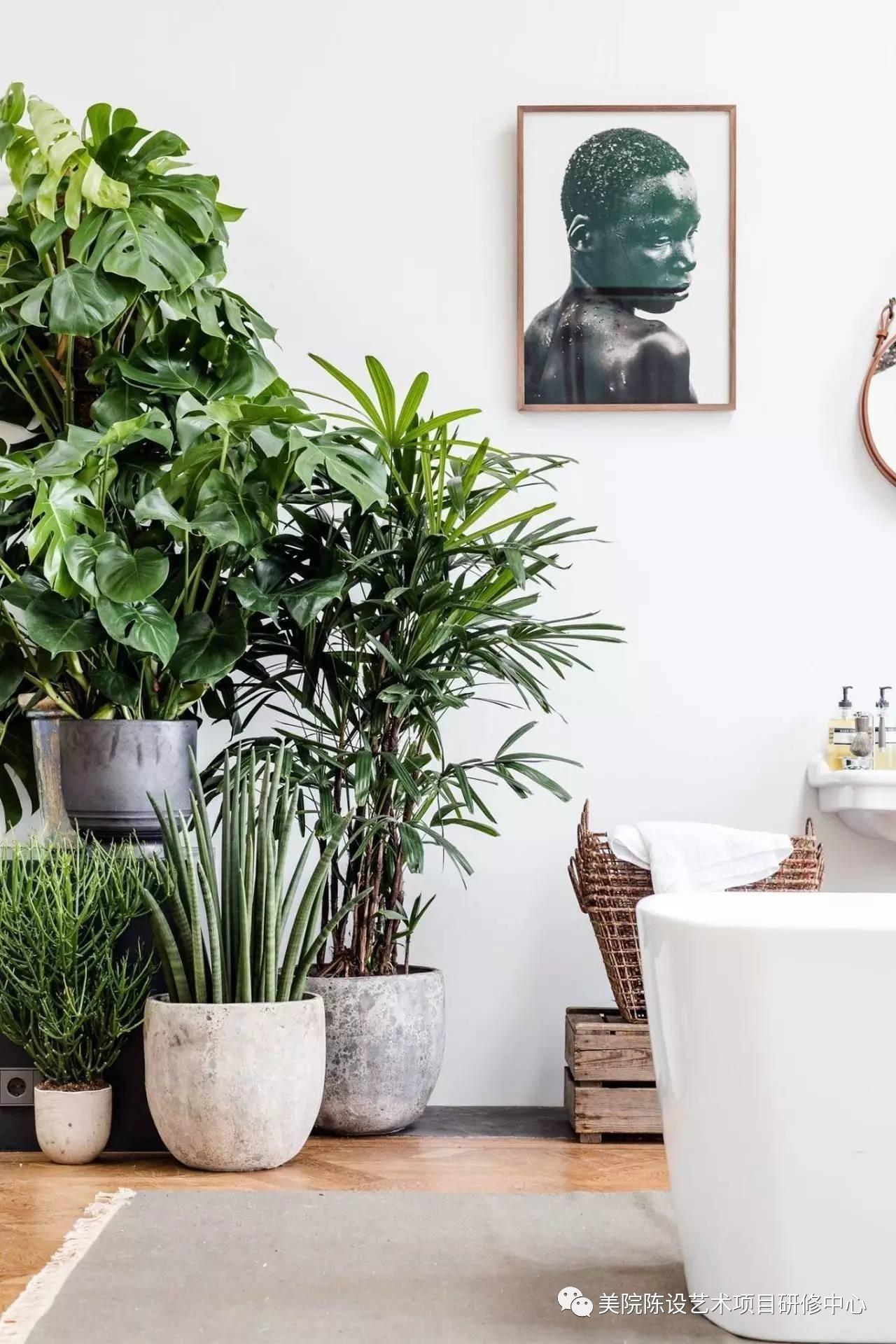 绿植 绿植一直是室内设计的宠儿,因为对大自然的需求是人类最本能的