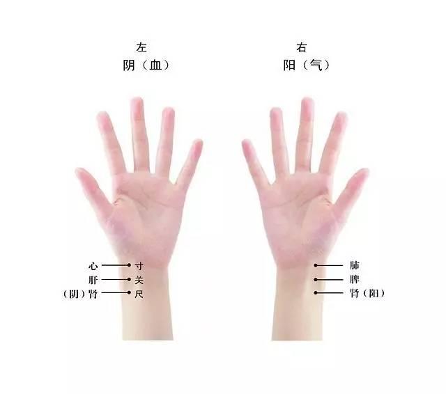 号脉男女什么原理_号脉左右手代表什么图