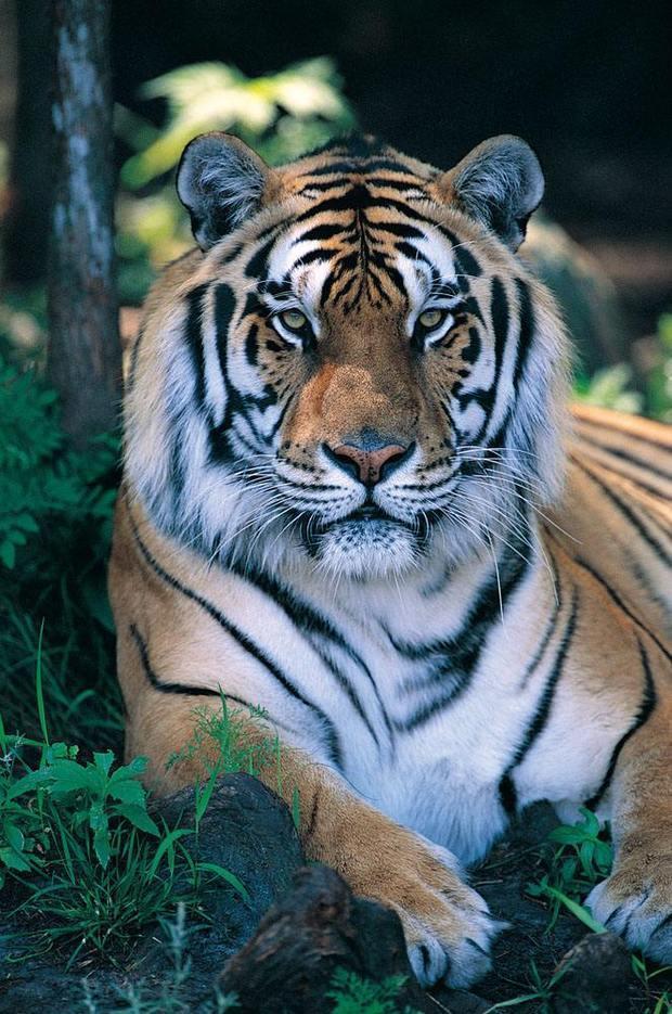 你是不是虎_【一周特刊】诗人高作余:你内心餋养着众多老虎 其中一只,会吃掉你