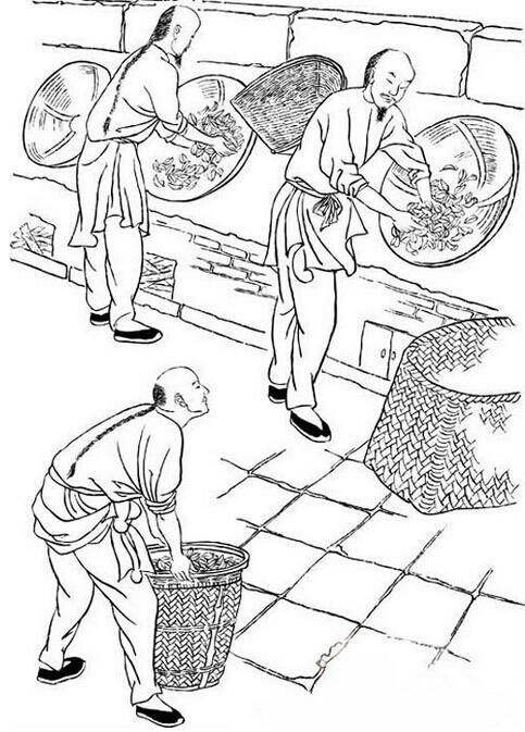 天下茶元 图解岩茶的制作工艺 工序最多的茶类