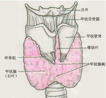 甲状腺射碘131是什么原理_什么是碘