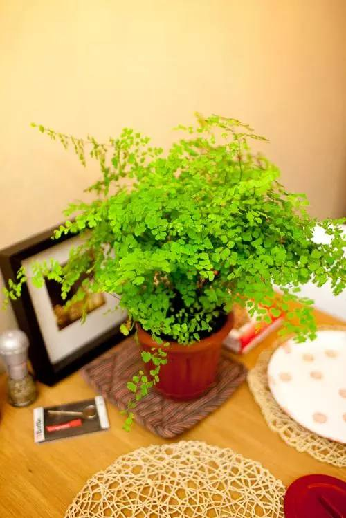 """吸收甲醛的室内植物_七款""""吸毒""""植物,室内的天然空气净化器"""