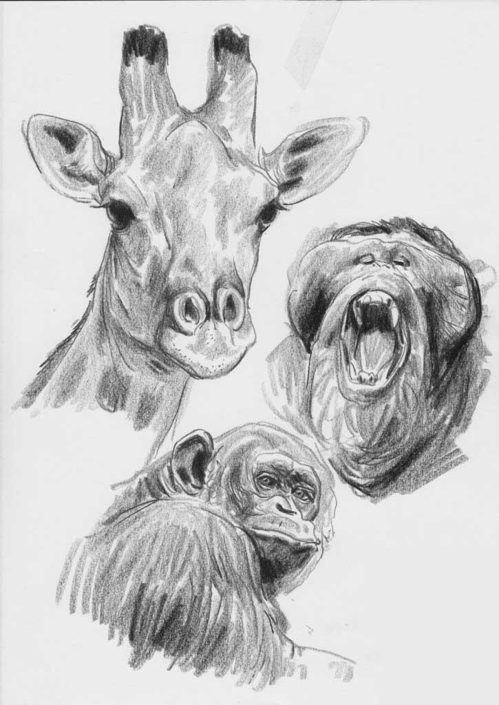 动物速写作品,诠释线与面的魅力!