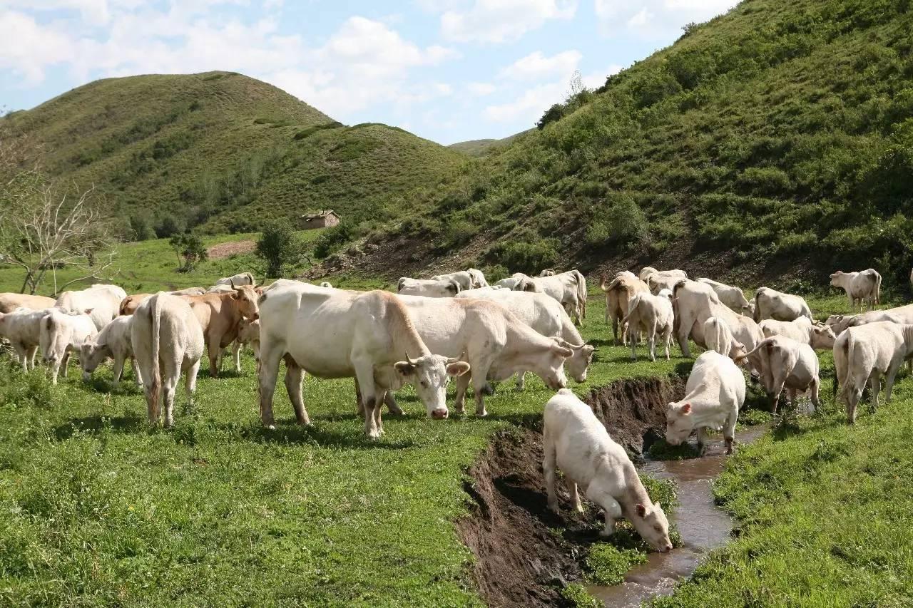 2017年该团将继续完善畜良种繁育,饲草料保障,动物疫病防疫,产业化