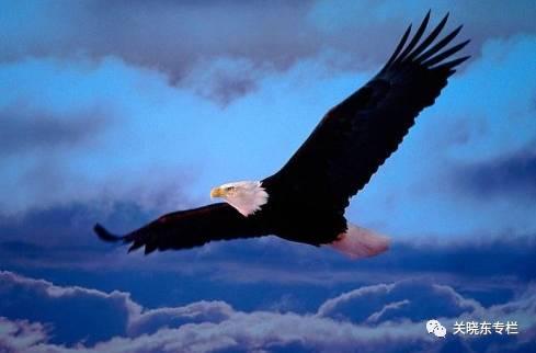 一曲享誉世界的排箫名曲 El Condor Pasa Fly Like An Eagle 山鹰之歌