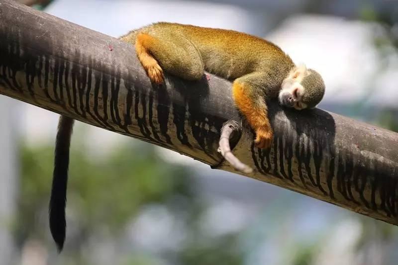 为了睡觉,动物世界简直就是各种高能啊!