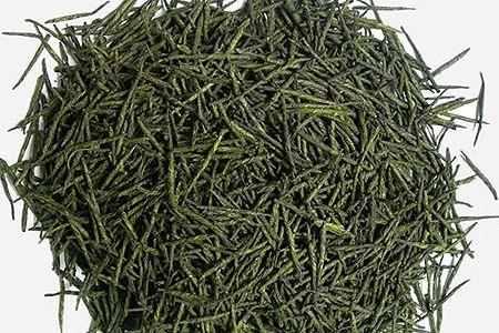苦丁茶主要为冬青科植物枸骨和大叶冬青的叶.