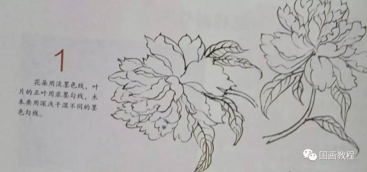 牡丹花简笔画步骤图解