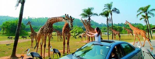揭阳计划投资20亿建大型野生动物园,揭西人又一个游玩