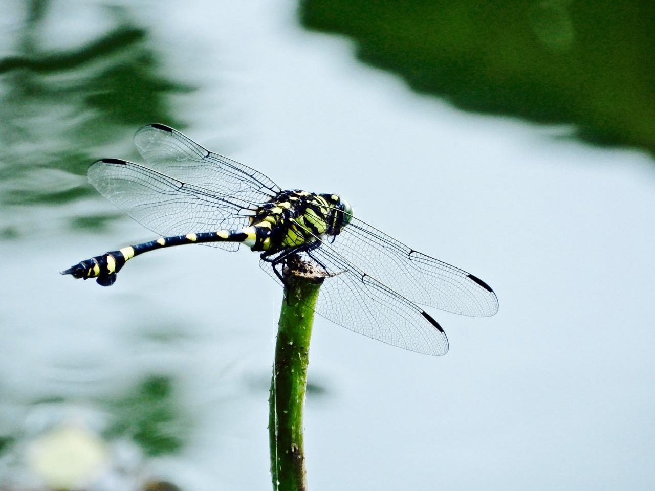 Arthur旅行笔记:夏天的红蜻蜓
