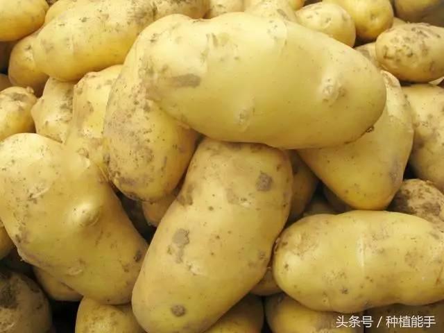 土豆视频空间_用一个方法种植土豆,省力省肥还高产
