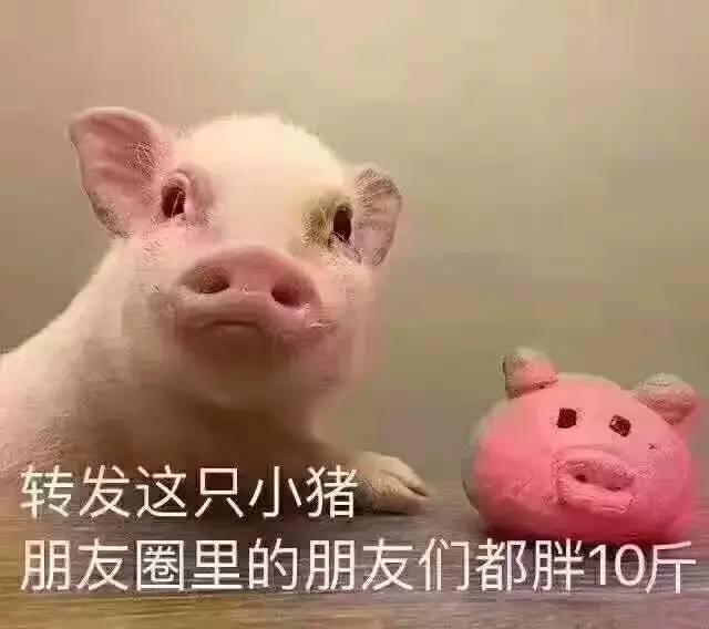 .   4、第一只我竟然看成狗了.   2、这只小猪怎么越看越像凤姐?