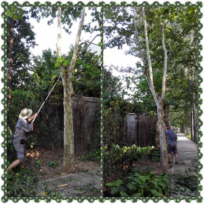 3,完成园区景观色带修剪工作.