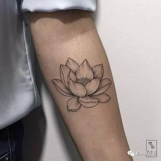 tattoo   纹身素材:莲花