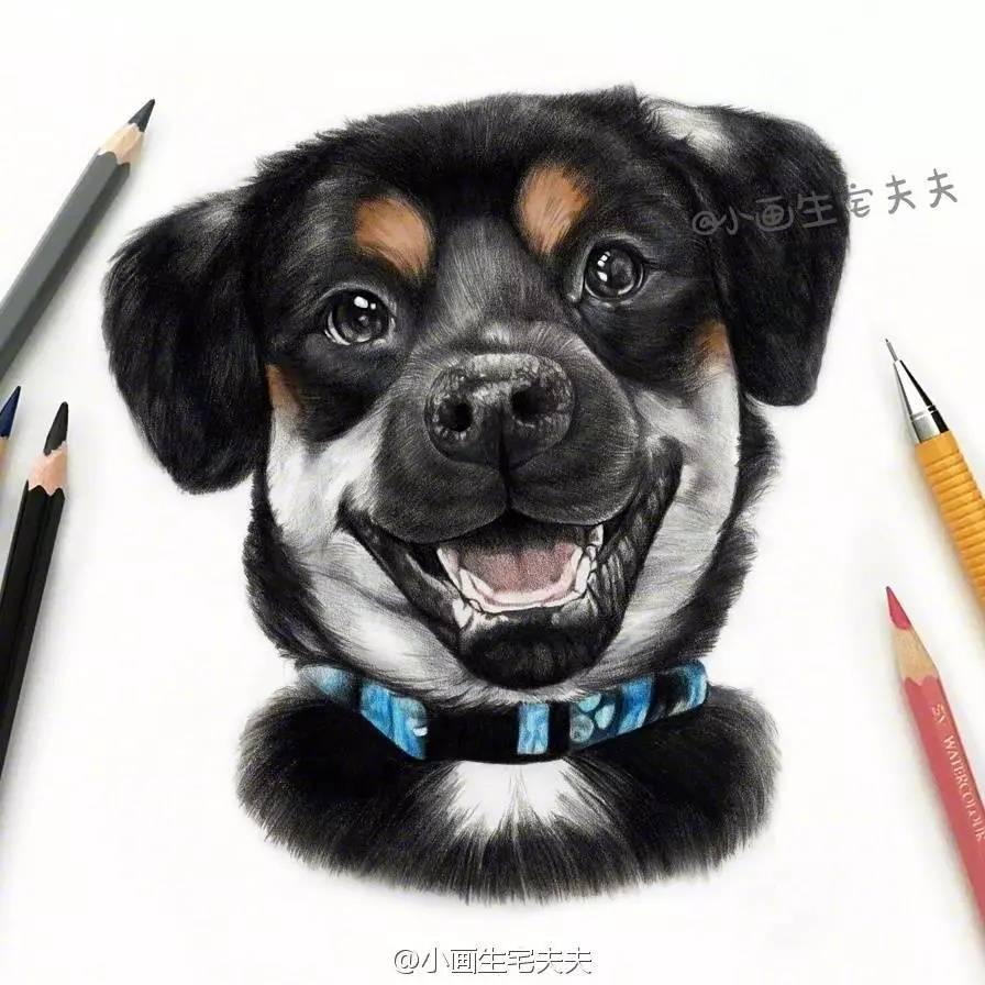 辉柏嘉彩铅60色 步骤一  ▼ 先用自动铅笔画出小狗的线稿,确定小狗