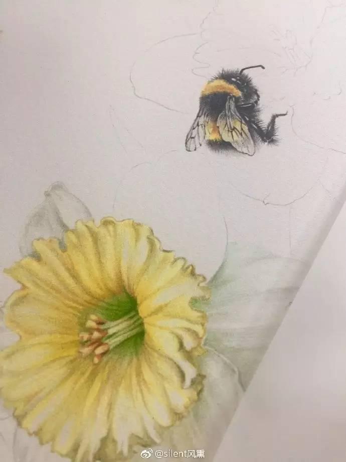 彩铅达人步骤临摹 | 两只小蜜蜂,飞在花丛中(silent风图片