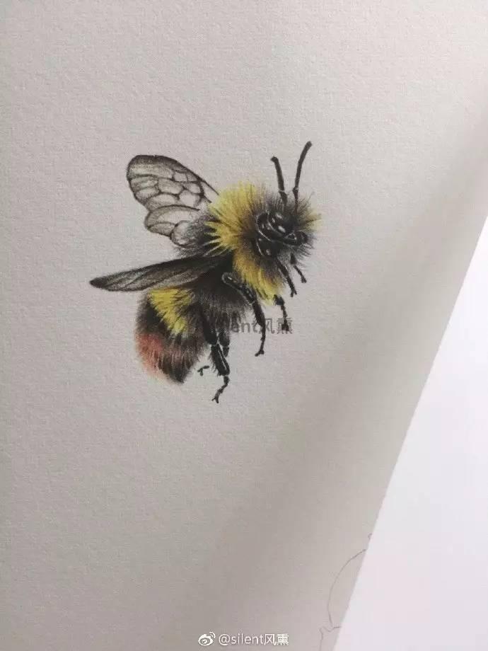 彩铅达人步骤临摹   两只小蜜蜂,飞在花丛中(silent风图片