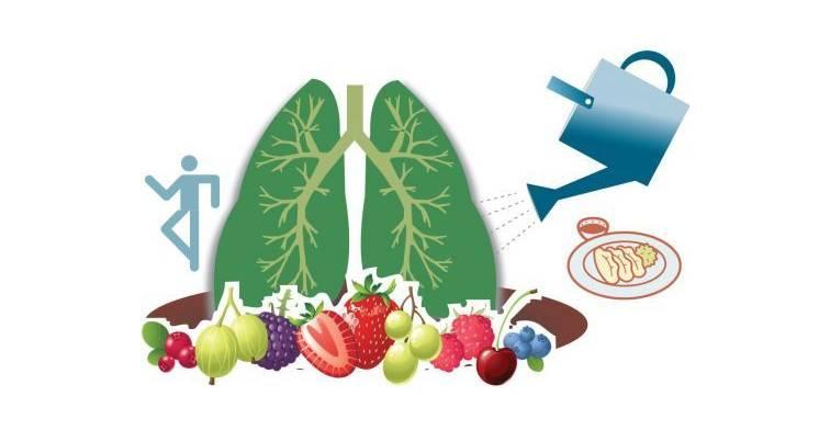 双肺矢量图