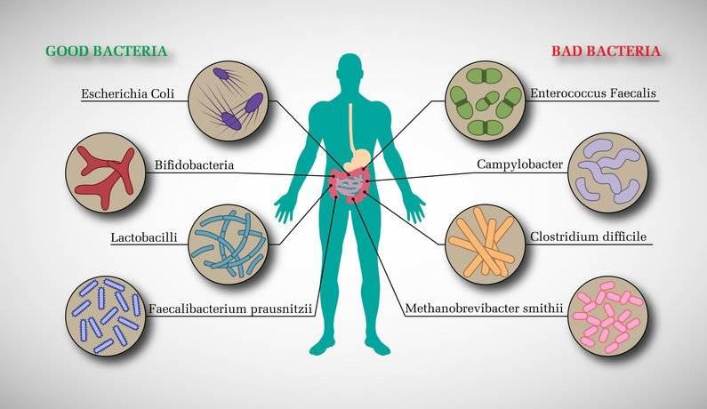人体肠道结构图_人体肠道微生物诊断服务
