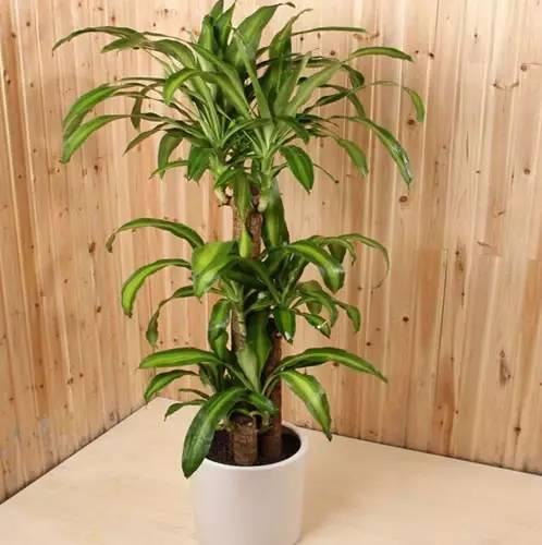 植物浇对水,才能安稳过炎夏