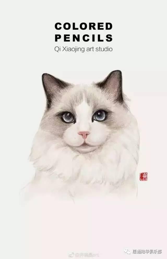 沙龙| 7月22日彩铅手绘猫咪