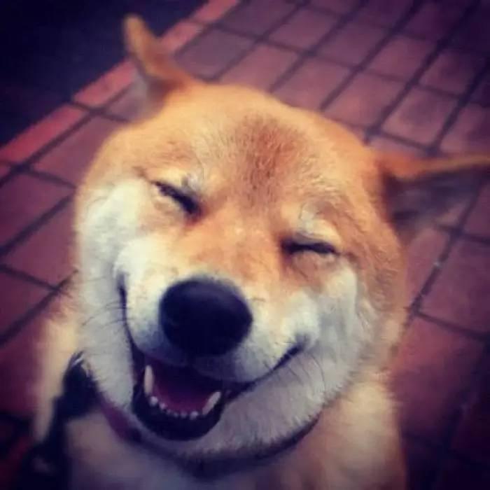狗狗开心时的信号你都知道吗?