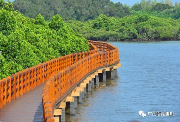 旅游 正文  早上指定时间地点出发,抵达茂名,参观【红树林湿地公园】图片