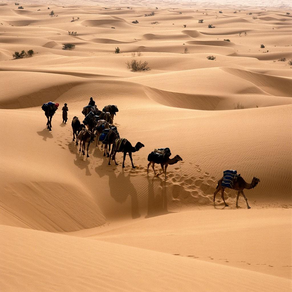 你仰慕过她的撒哈拉生活,让你爱上了沙漠,更喜欢她的《撒哈拉的故事》图片