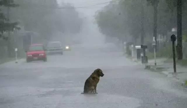 狗狗的忠诚感人故事,你能忍到第几张不哭?
