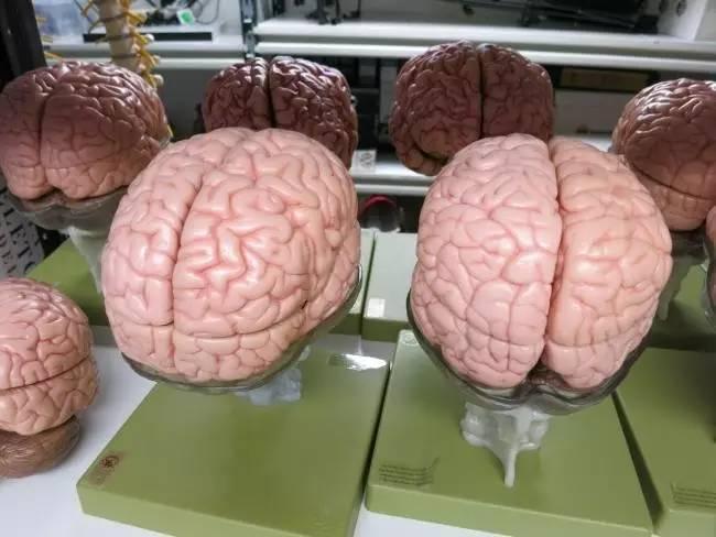 尸体解剖_已经进行过尸体解剖,器官捐献,或者最近进行过化疗的,得过胃肠癌的