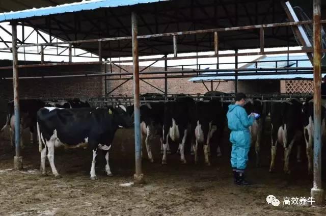 半开放式牛舍,在冬季寒冷时,可以将敞开部分用塑料薄膜遮拦成封闭状态