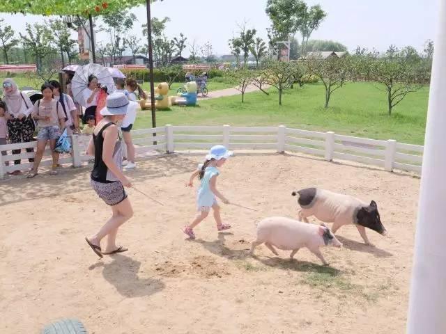 和泰迪农场的小动物来一场亲密的约会!感受自然的美好!