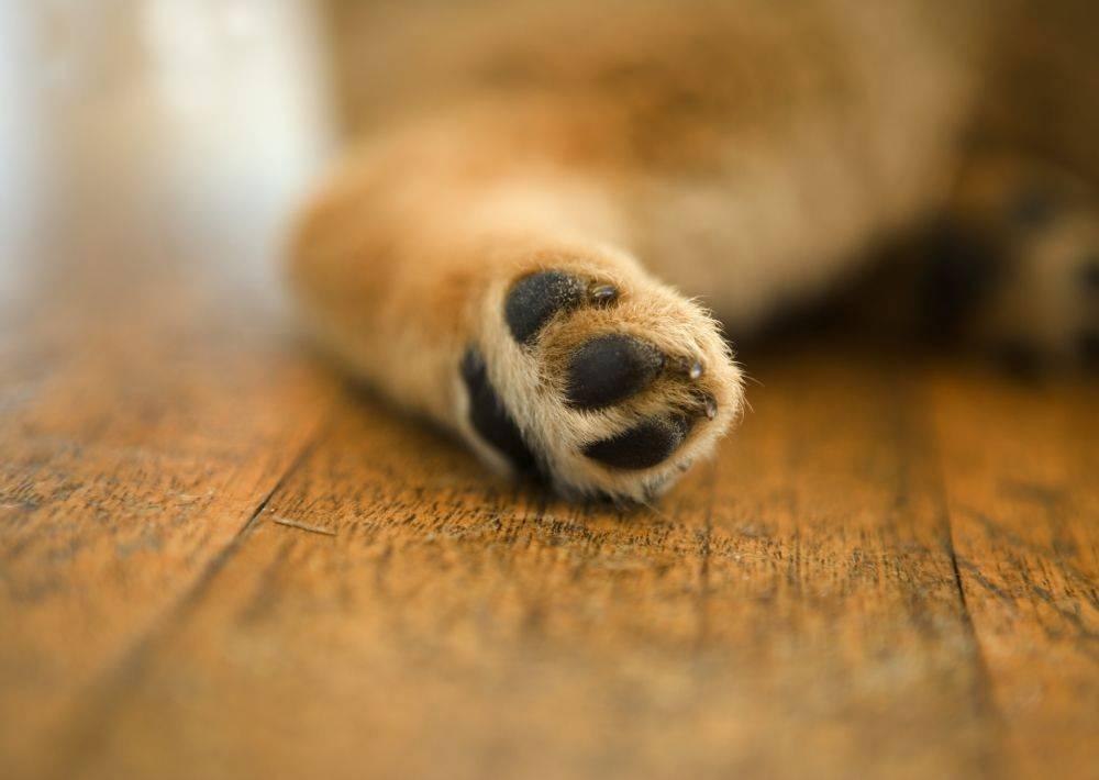 动物脚掌矢量图片