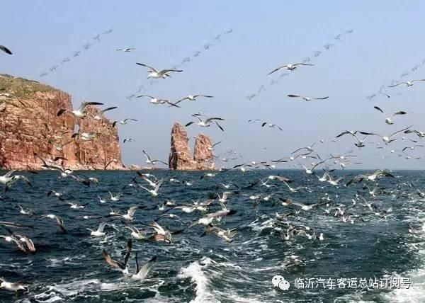 体验大自然的鬼斧神工,后乘车赴中国最美的鹅卵石海滩---【半月湾景区