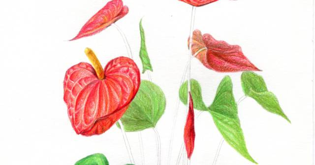 的形状就是一个圆柱体,所以它的素描关系如下 -超详细的彩铅花卉图片