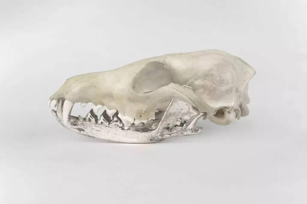 动物骨骼首饰艺术