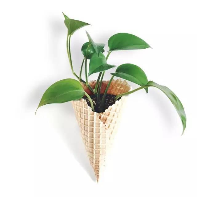 壁纸 花 盆景 盆栽 植物 桌面 640_640
