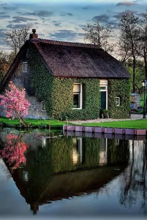 不用再买天价的鸽子房,自己设计栋小房子,屋前屋后种些花草.