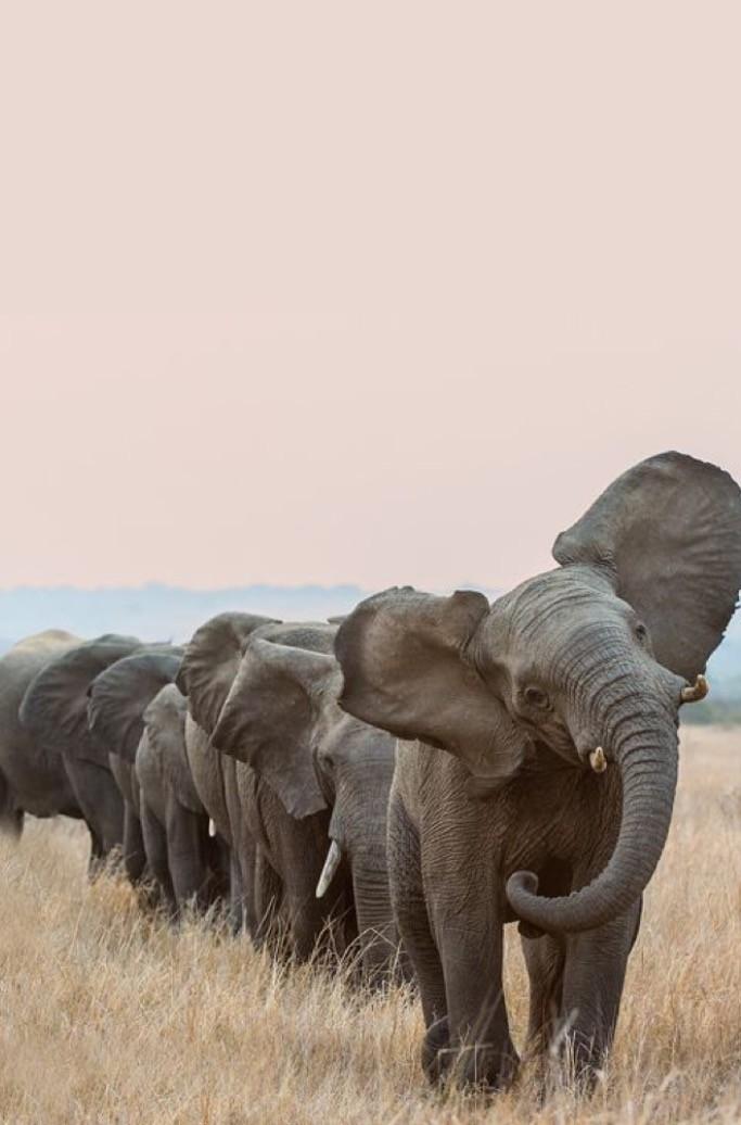 纸杯手工 动物大象