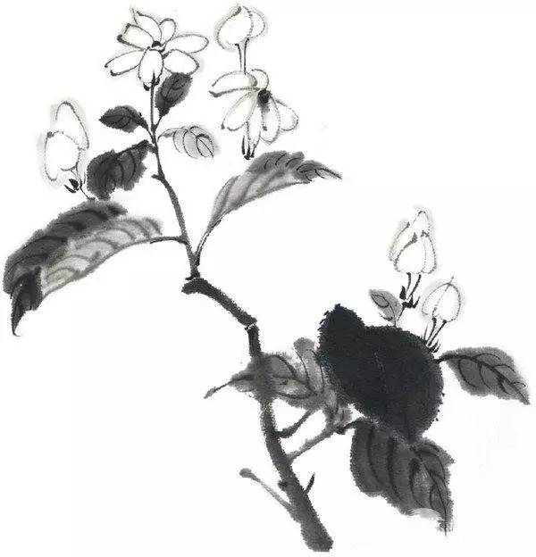 教程水墨芍药鸡冠花水仙茉莉花的画法
