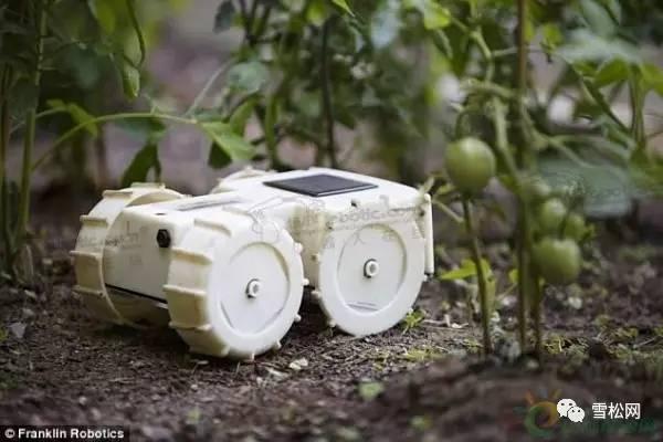 除草机器人tertill 太阳能供电自动修剪草坪
