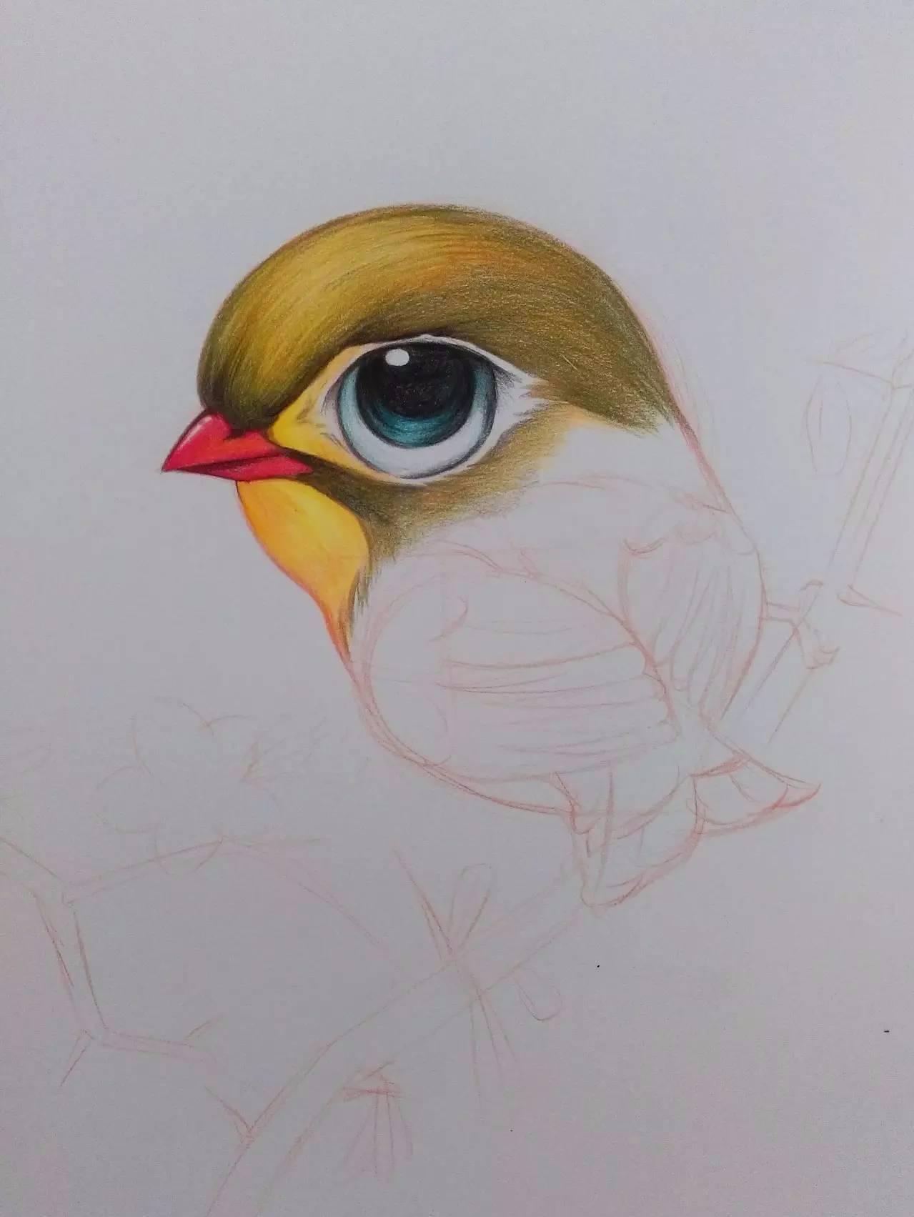 教程| 教你用彩铅画一只相思鸟